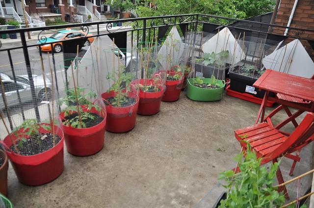 garden, June 12