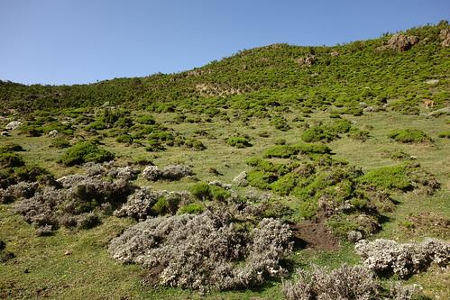 衣索比亞綠化成功的Bale Mountains。(來源:Davy Demaline)