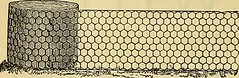 """Image from page 303 of """"The Gardeners' chronicle : a weekly illustrated journal of horticulture and allied subjects"""" (1874)"""