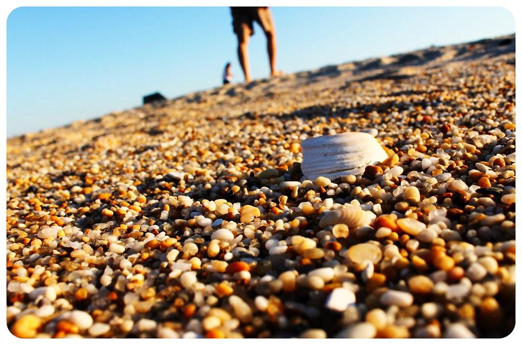 sandy hook shell