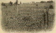 """Image from page 36 of """"Agriculture for beginners"""" (1904)"""