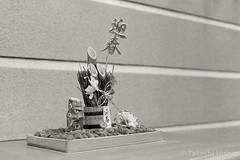 2014-01-07_700_VS_TIF001_1736.jpg