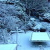 Snow Day. Our back garden on Maheno St., Maori Hill, Dunedin, NZ at 8:00 am, Friday Aug. 8 2014