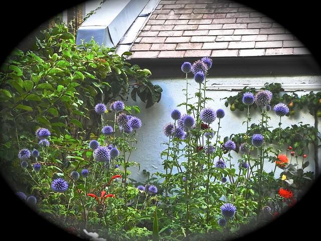 Steve's garden variations