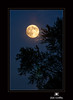 The August 2014 Supermoon by Jim Crotty