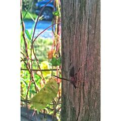 #InstaSize #wasp #RUN lol #summertime #iphone5 #snapseed