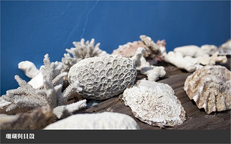 珊瑚與貝殼