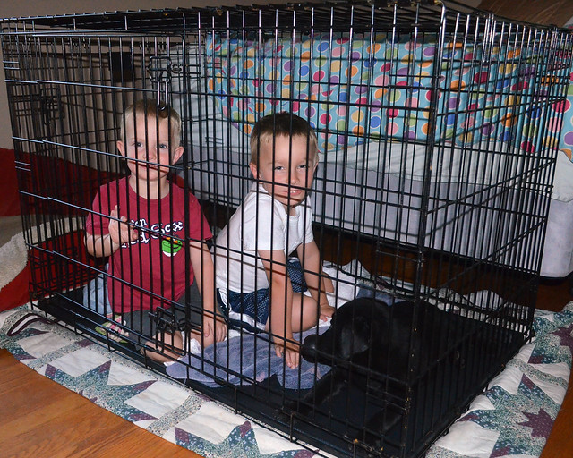 r & w in the dog crate