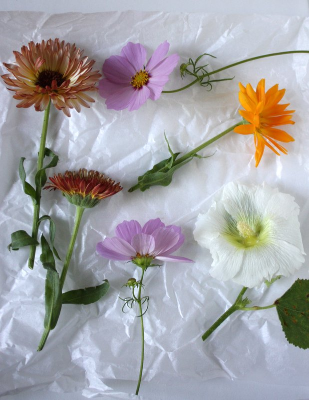 cut flowers on tissue paper: calendula, cosmos, hollyhock