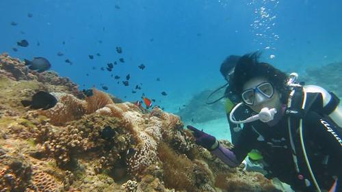 花瓶岩體驗潛水