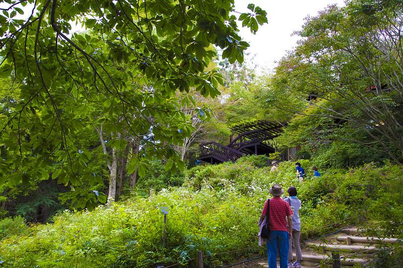 六甲ガーデンテラス・植物園62
