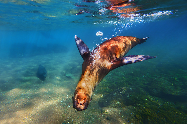 Swimming with Sea Lions @ the Galapagos