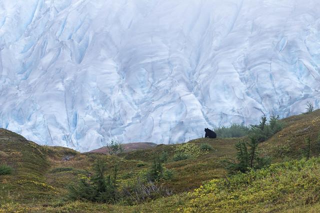 Harding Ice Field Hike - Black Bear Sighting!