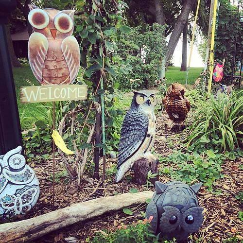 #owls #welcome #sign #garden #art #kitsch #lynnfriedman
