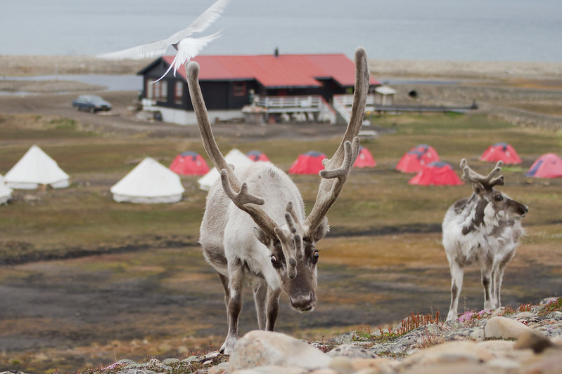 RelaxedPace00835_Svalbard7D4512