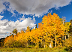 Grand Mesa Fall Colors (9-22-14)