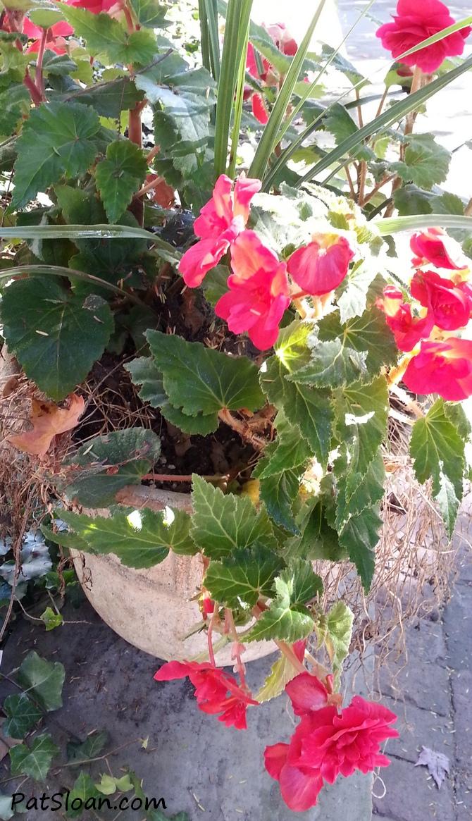 pat sloan flowers