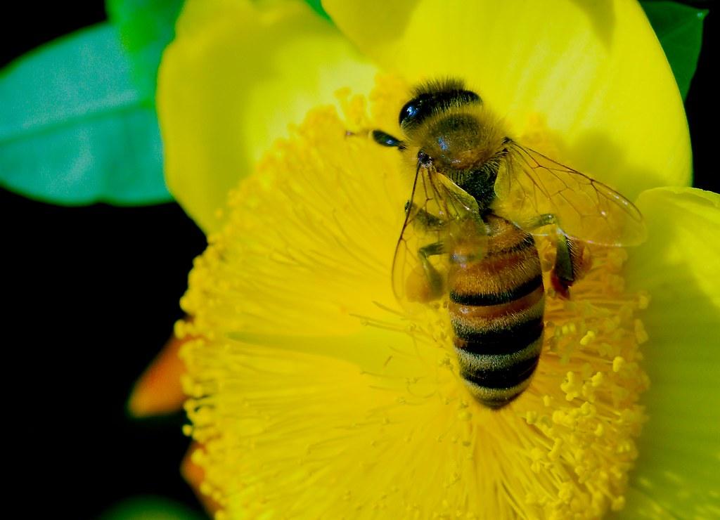 Bee_19
