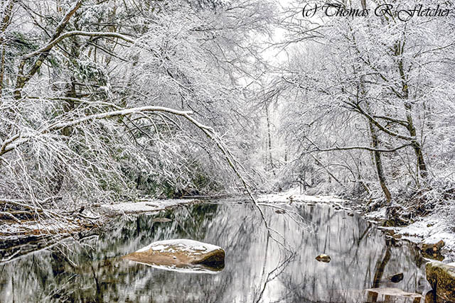 March Snow along Cranberry River
