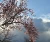 A Berkeley Spring Sky