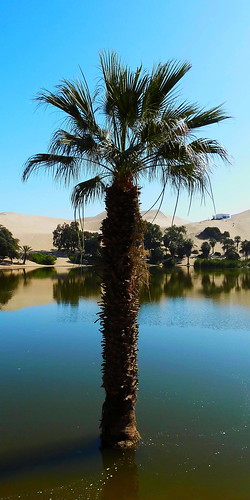 sky coast colourful colours composition earth landscape nature outdoor panorama paysage perspective scenery scenic shore sunny travel view vista water waterscape extérieur vert lake southamerica peru perou huacachina oasis desert palmtree tree blue flora
