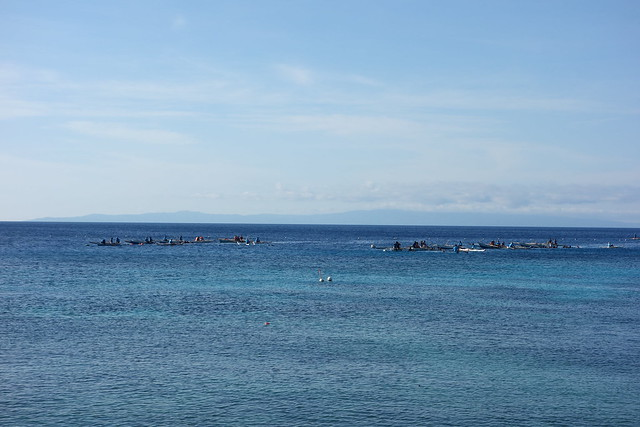 Tiny boats out in the sea, where the whale sharks are.