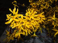 Aranysárga virág 1