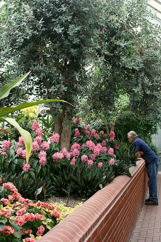 43_greenhouse_gardens