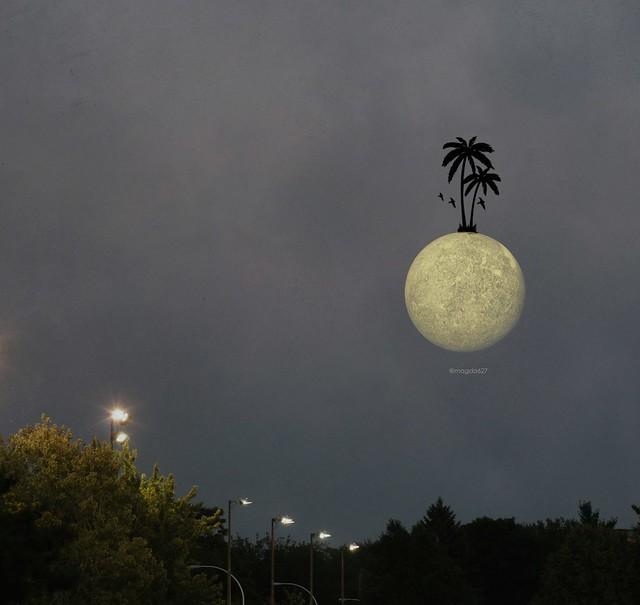 palme_lune