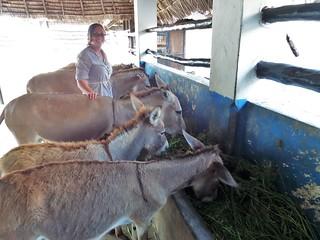 Linda kümmert sich um die Esel im Donkey Sanctuary