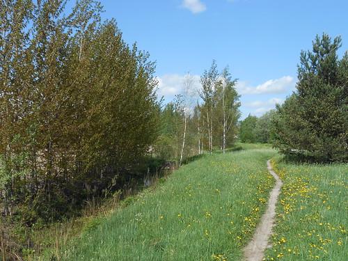 Niittynäkymä, Pohjois-Tapiola Espoo 26.5.2014
