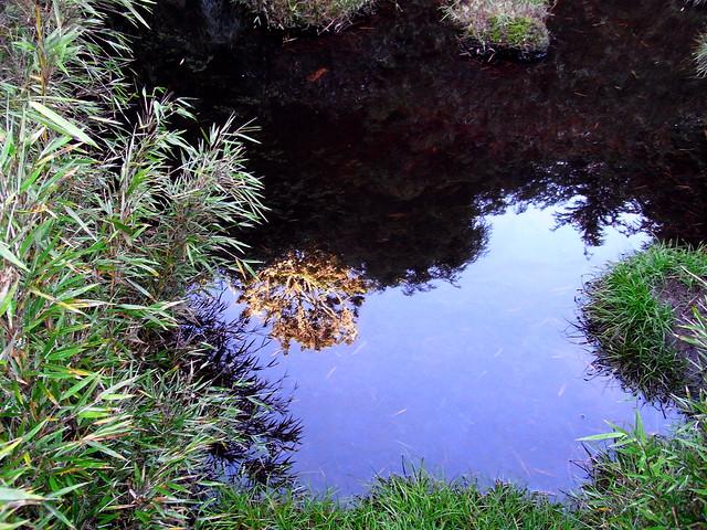 司宴池第四池水源