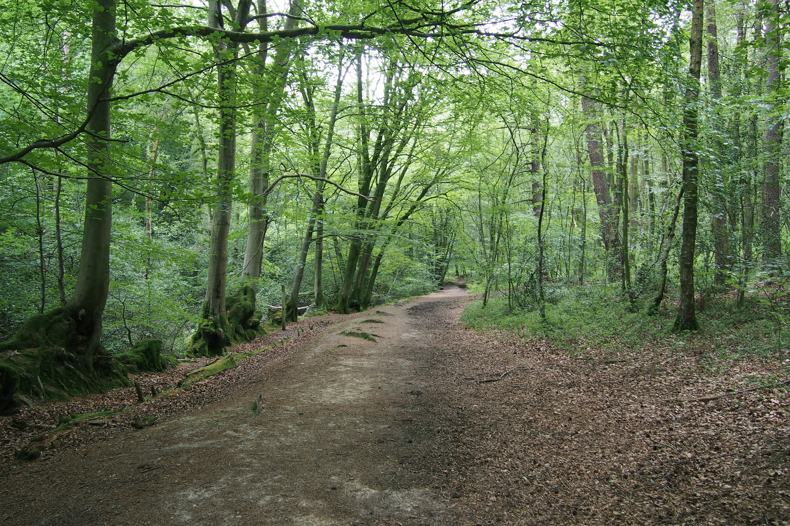 Woodland near Friday Street