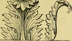 "Image from page 226 of ""The standard cyclopedia of horticulture; a discussion, for the amateur, and the professional and commercial grower, of the kinds, characteristics and methods of cultivation of the species of plants grown in the regions of the Unite"
