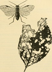 """Image from page 230 of """"A manual of dangerous insects likely to be introduced in the United States through importations"""" (1917)"""