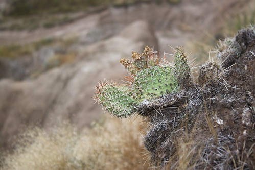 Some little cactus.