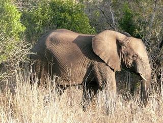 Wilde Tiere im natürlichen Lebensraum