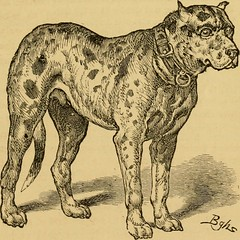 "Image from page 394 of ""Breeding, training, management, diseases & c. of dogs:"" (1877)"