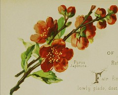 """Image from page 31 of """"The Artistic language of flowers"""" (1888)"""