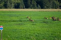 North American Wildlife 74