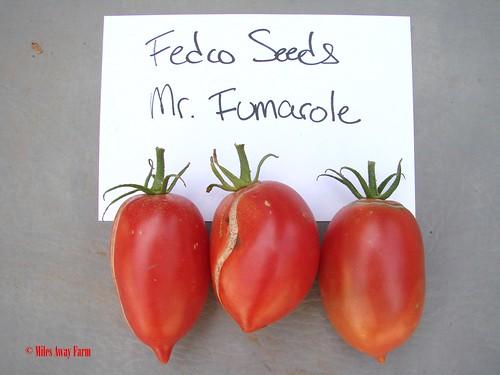 Mr. Fumarole