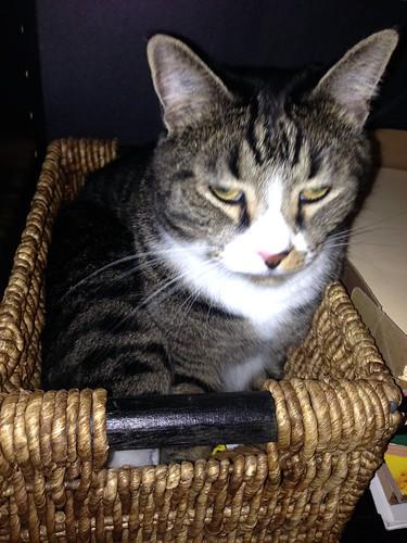 Watson in a Baskete