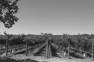 Trefethen Family Vineyards - Vineyards