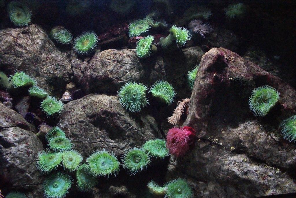 Eponges dans l'aquarium géant de Lisbonne.