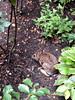 Garden Intruder
