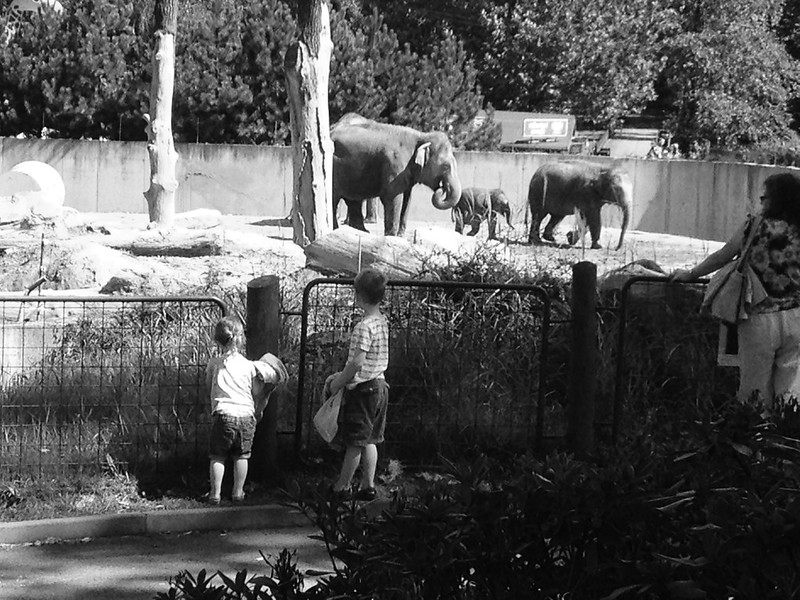 The Zoo Part Two