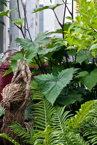 Large Leaf Ligularia and Ferns Garden Scene