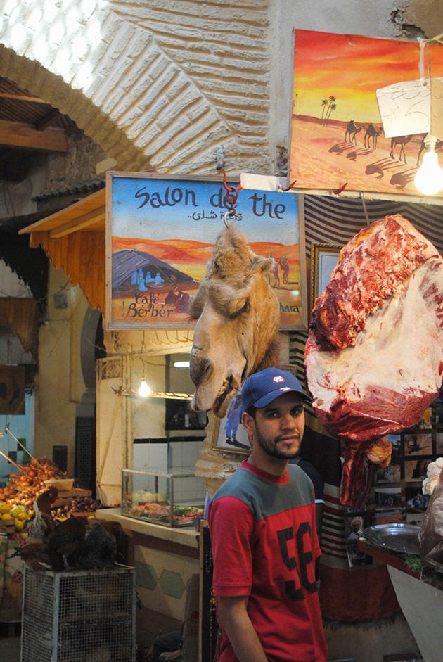 moroccocamel