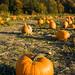 ABC's of Healthy Foods: Vegetables: P = Pumpkin: reduces the risk of rheumatoid arthritis.