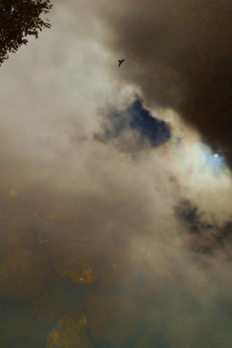 blackcreekflooding reflections upmichigan hawk tanicacidwater